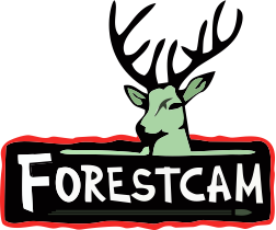 Fotopast Forestcam